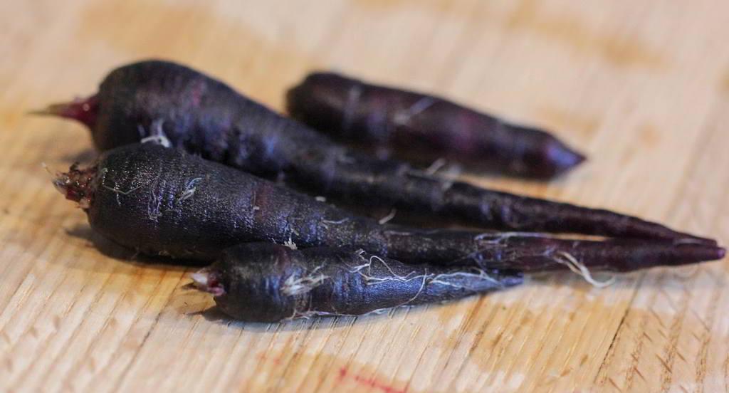 carota nera