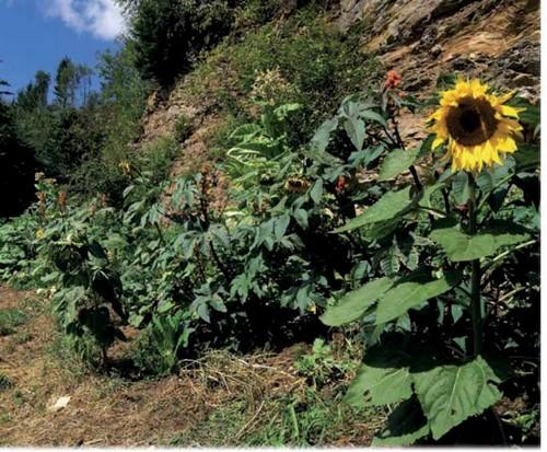 Sepp Holzer Guida Pratica alla Permacultura 2