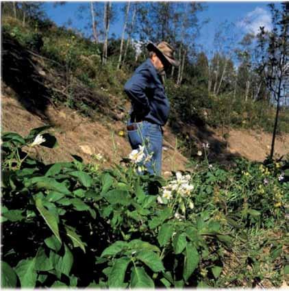 Sepp Holzer Guida Pratica alla Permacultura 3